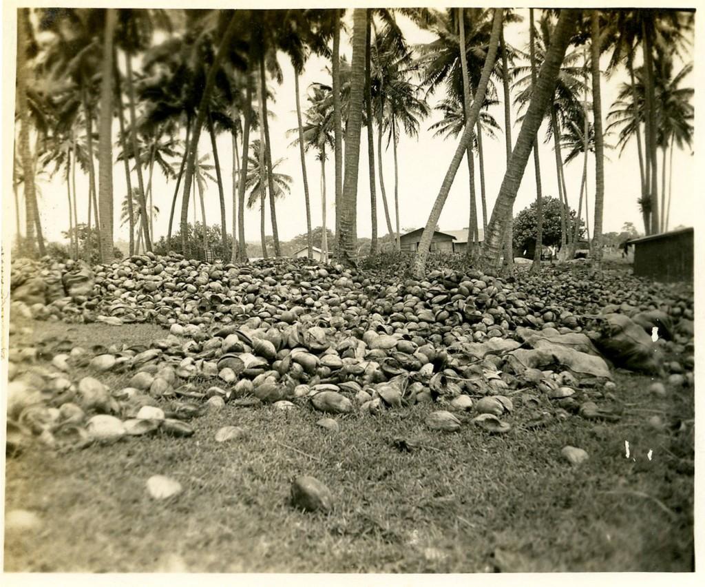 Coconut Grove, New Hebrides.