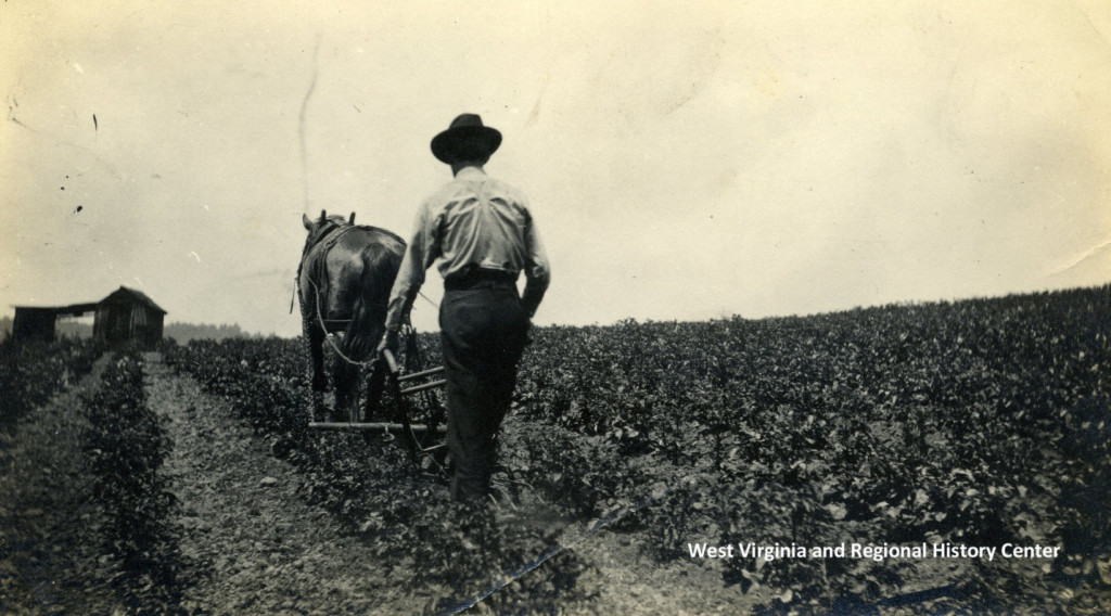 Man with horse and plow in field