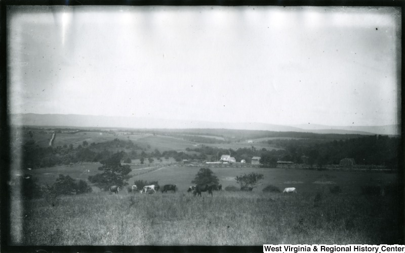 Cedar Creek Battlefield View West from General Crook's Camp, Wednesday, July, 30, 1884--view includes large fields and cattle