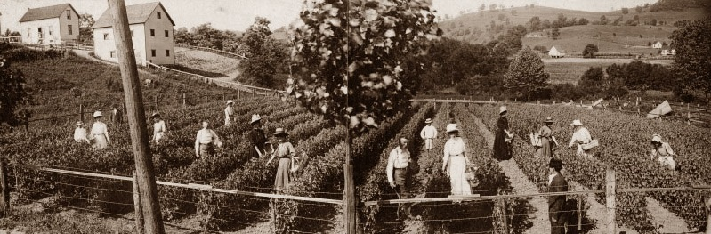 Harvest Time: A Gathering of Historical Photographs