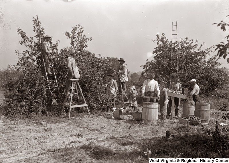 Group of people picking apples