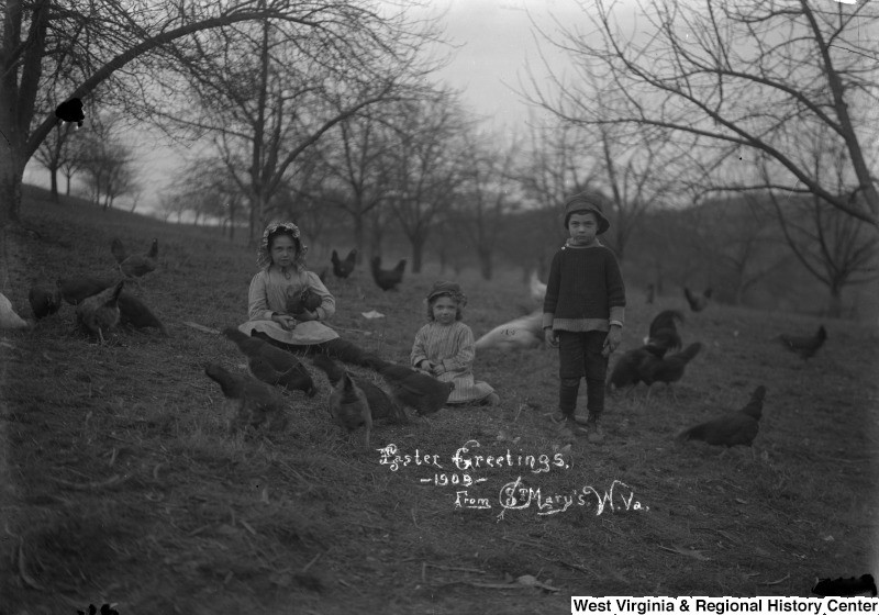 Three children in field of chickens