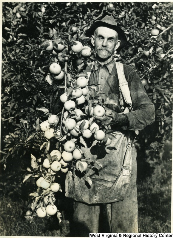 Man with branch of apples over his shoulder