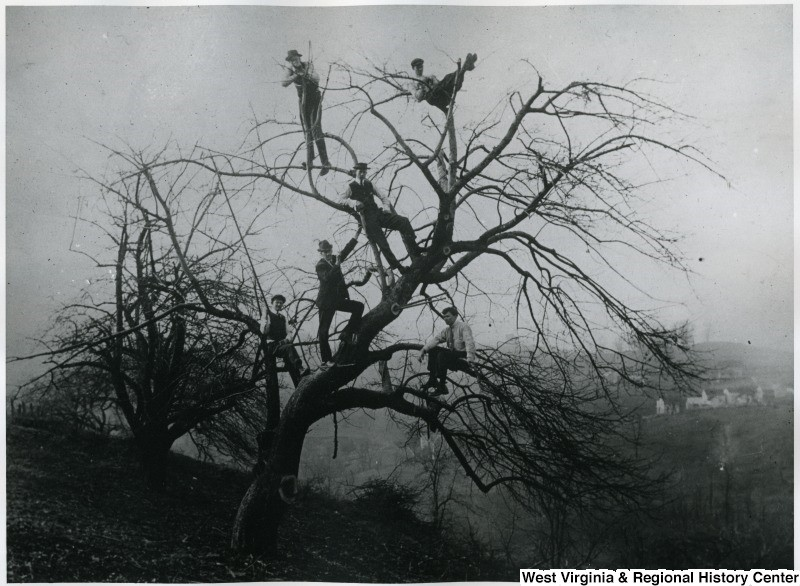 Bare tree with men in the branches