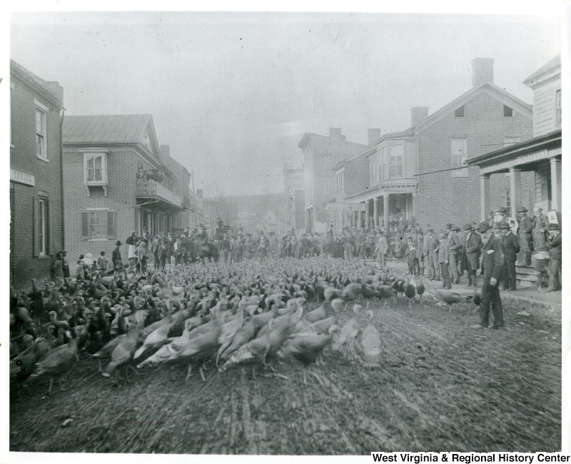 Turkeys being driven through a Lewisburg street, ca. 1900.