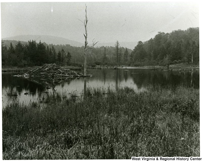 Ground floor view of the Canaan Valley wetlands, undated