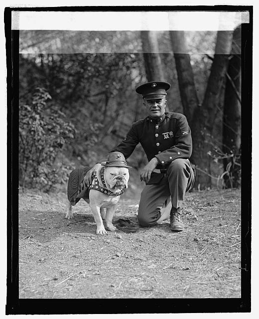 Image of Jiggs the Marine Corps bulldog with man kneeling beside him.