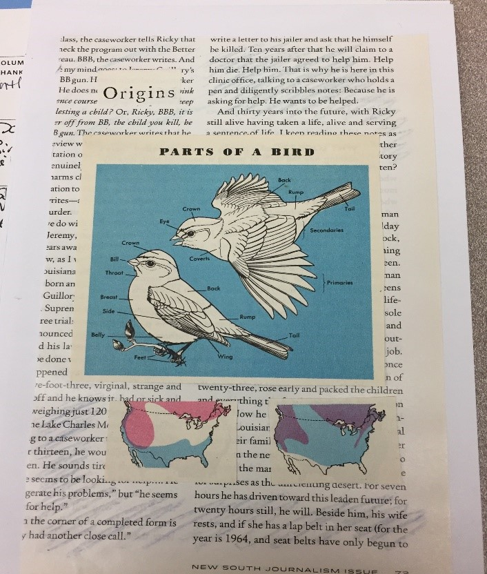 Zine page showing parts of a bird image
