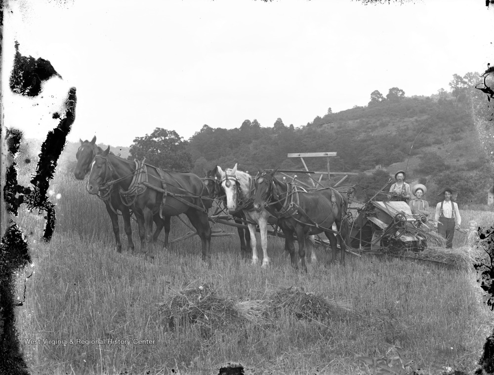 Three adults standing with farm equipment that is hitched to two teams of two horses.