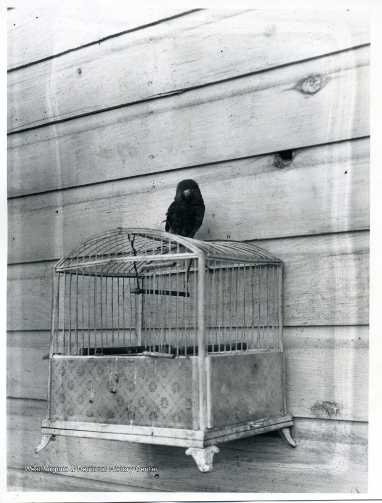 Dark colored bird sitting on top of a bird cage that is affixed to a wall.