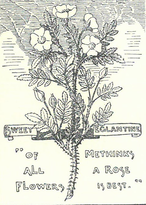 """Book page showing a sketch of a sweet eglantine, with the quote """"of all flowers methinks a rose is best"""""""