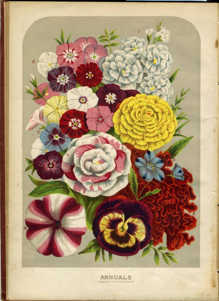 Book page labeled Annuals, with many flowers depicted in color