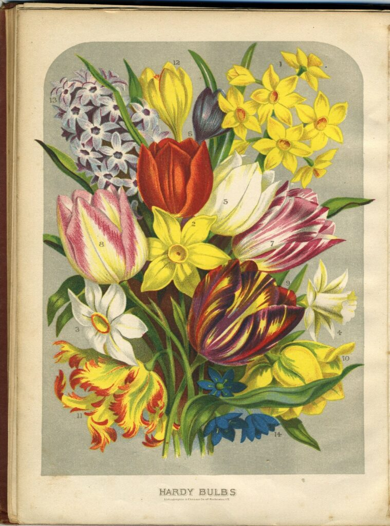 Book page labeled Hardy Bulbs, with many flowers depicted in color