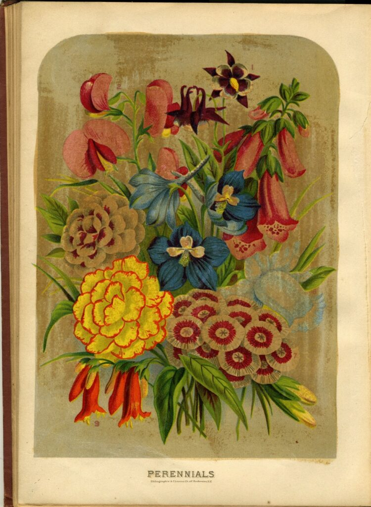 Book page labeled Perennials, with many flowers depicted in color