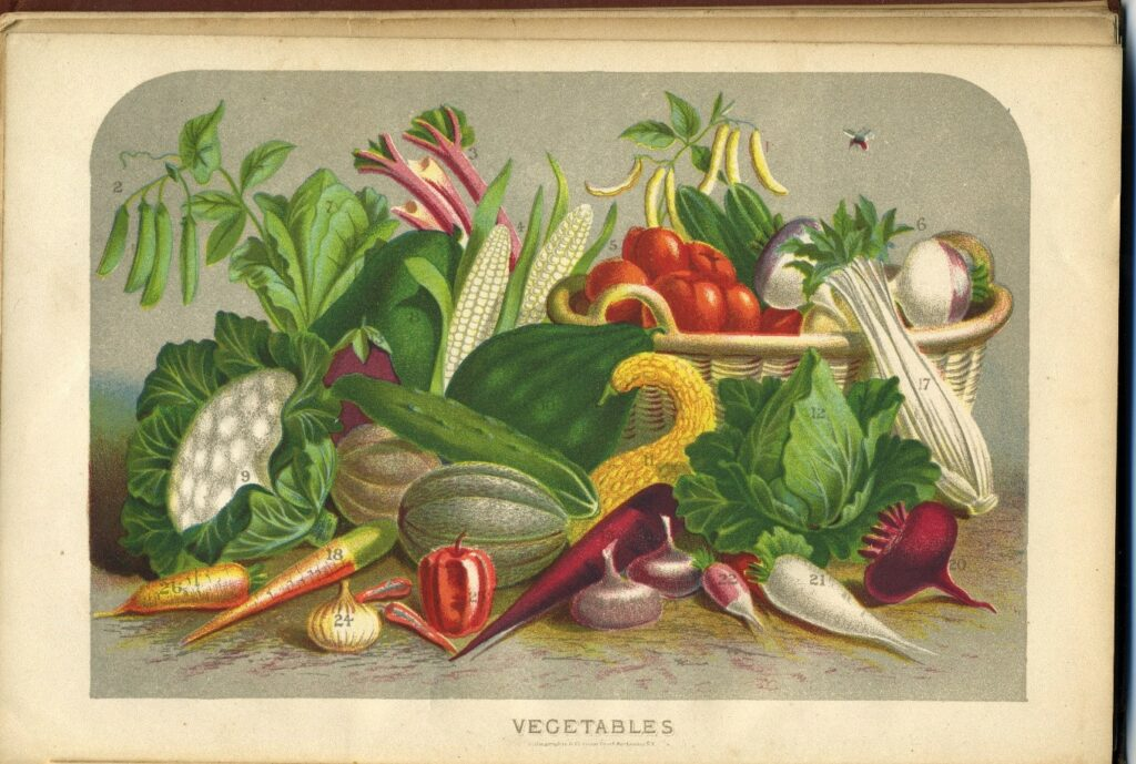 Book page labeled Vegetables, with many vegetables depicted in color