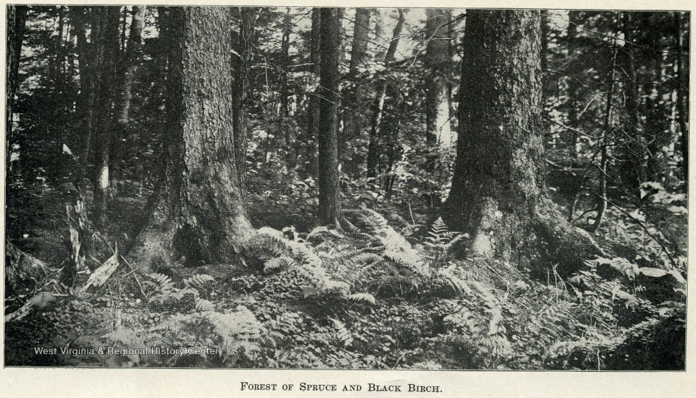 A forest floor and trees