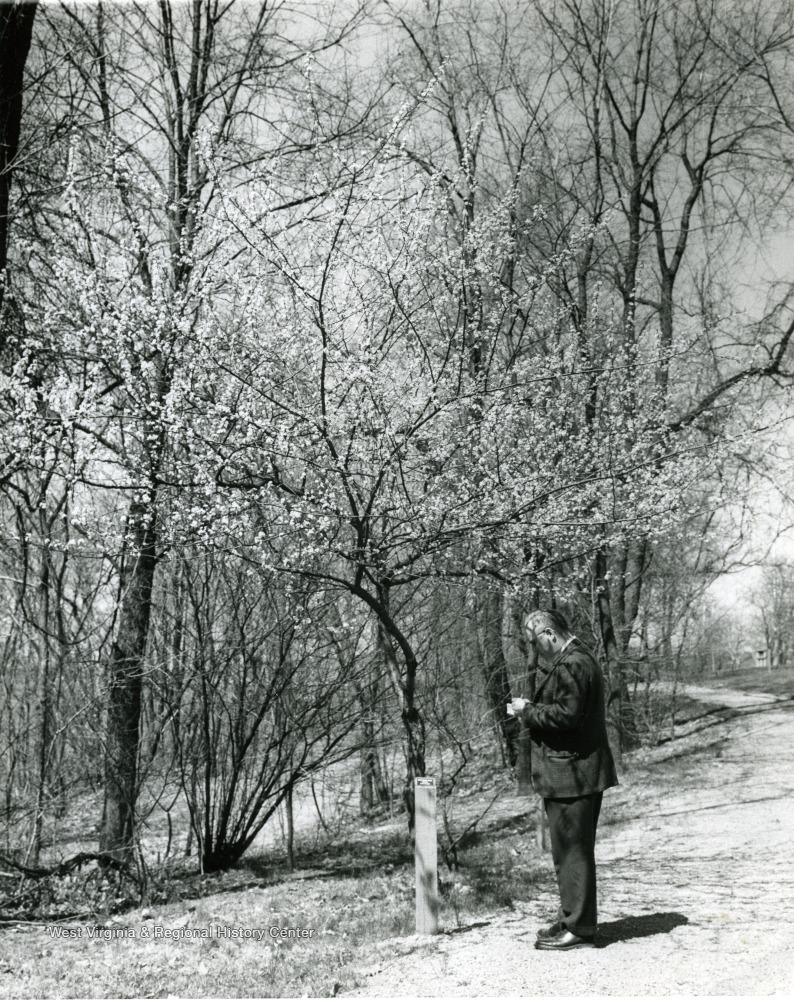 director of the WVU Arboretum
