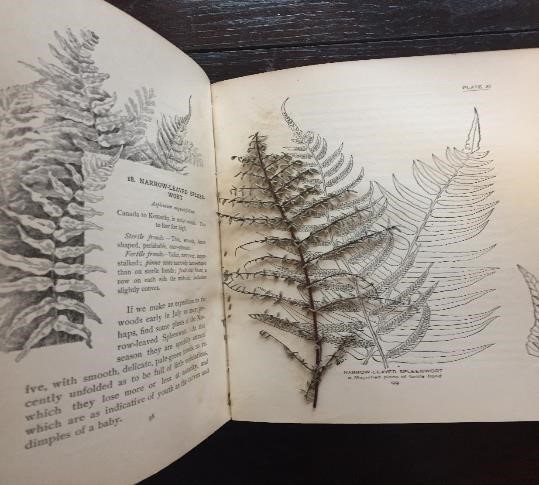 Interior of book, showing text and sketches of ferns, and a pressed fern