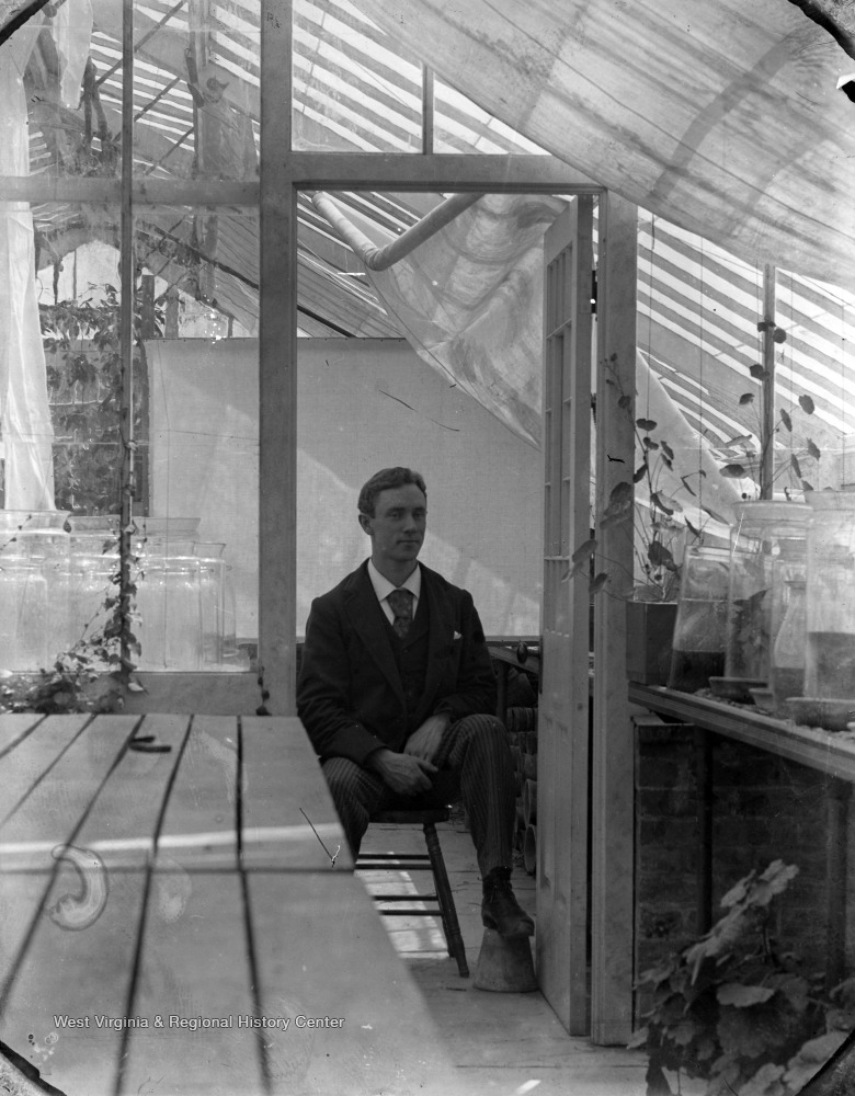 William E. Rumsey, an entomologist, sitting in a greenhouse.